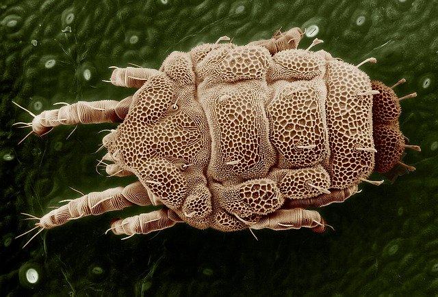 Parasiten Im Körper Video